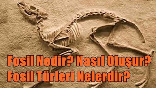 Fosil Nedir? Nasıl Oluşur? Fosil Türleri Nelerdir?