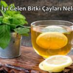 Gribe İyi Gelen Bitki Çayları Nelerdir?